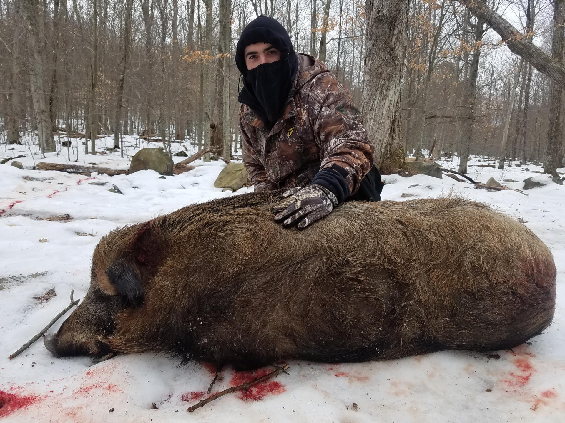 boar hunting ranch guided wild hog hunts russian boar hunting